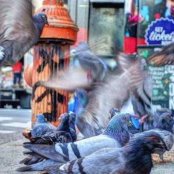 👉fowl Food Frenzy👈 🐦 By The by Stacey Lewis