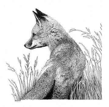 Fox in Grass by Scott Woyak
