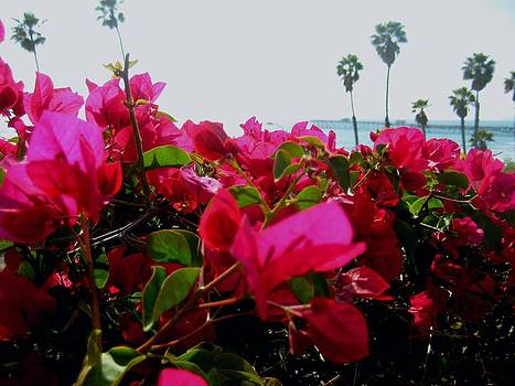 Fragrant Glance Of San Clemente Pier by Melissa McCrann