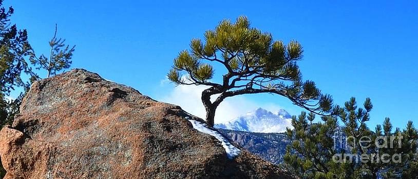 Framed Longs Peak by Reza Mahlouji