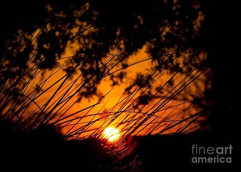 Framed Sunset Reeds  by Imani  Morales