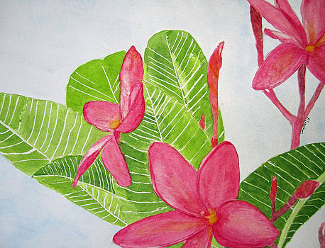 Frangipani Tree by Elvira Ingram