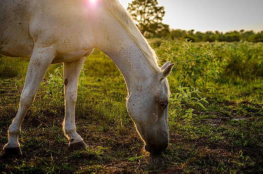 David Morefield - Freckles Pferd