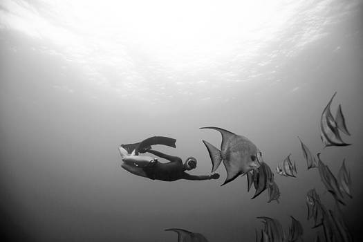Freediver and Batfish by One ocean One breath