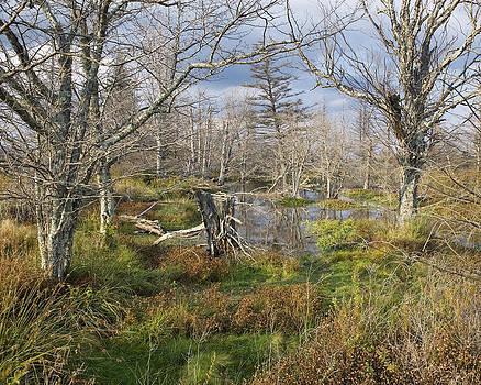Freeland Trail by Wayne Letsch