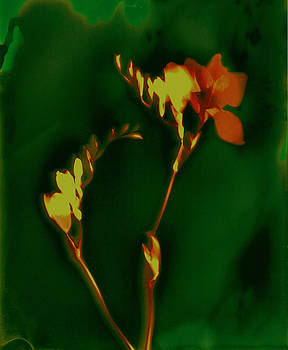 Susan Leake - Freesia 2