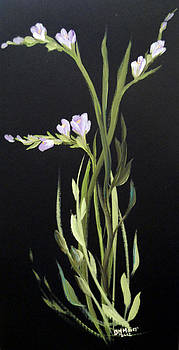 Freesia by Dorothy Maier