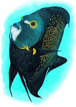 French Angelfish by Roger Hall