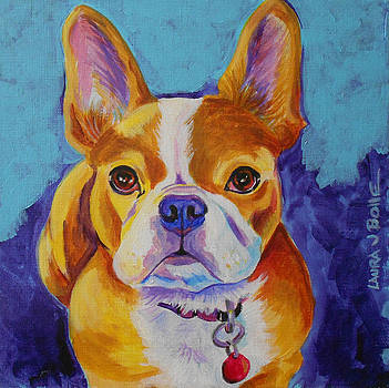french Bulldog by Laura Bolle