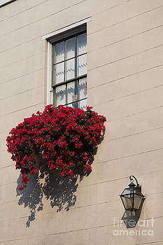 French Quarter Flowers by Susie Hoffpauir