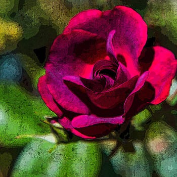 Chris McKenna - Fresco Rose