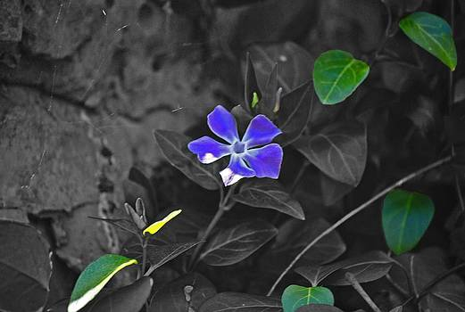 Fresh Bloom by Melissa Jones