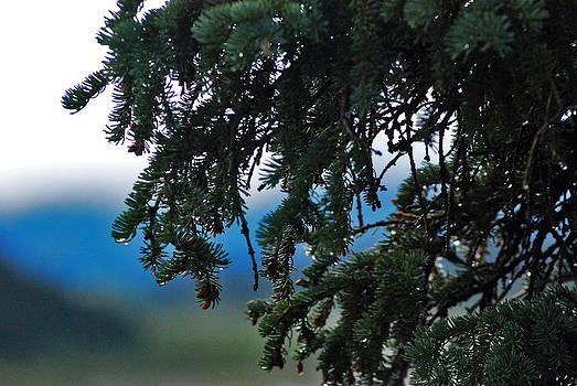 Fresh Dew Drops by Preston Zeller