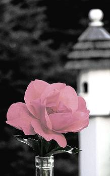 Angela Davies - Fresh From The Rose Garden