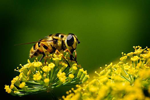 Zoran Buletic - Fresh Nectar