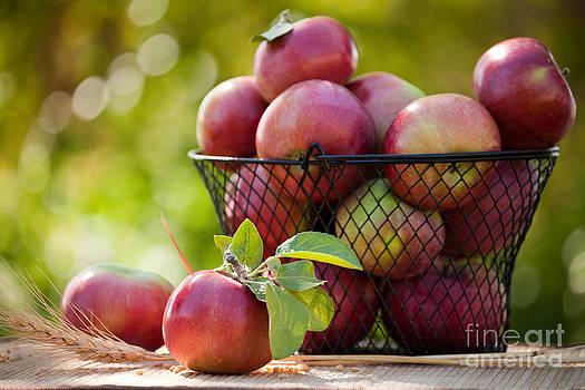 Fresh Picked Apples by Cindy Singleton