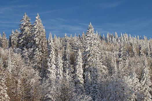 Fresh Snow by Dawn Morrow