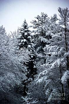 Frank J Casella - Fresh Snow