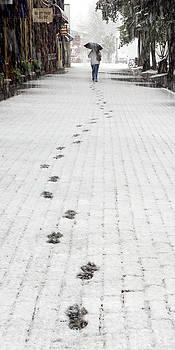 Paul Conrad - Fresh Tracks