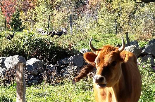 Mike Breau - fresh turkey and a little bull