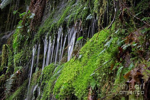 Fresh Water by Deanna Proffitt