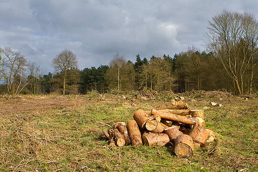 Fizzy Image - freshly chopped logs in a field