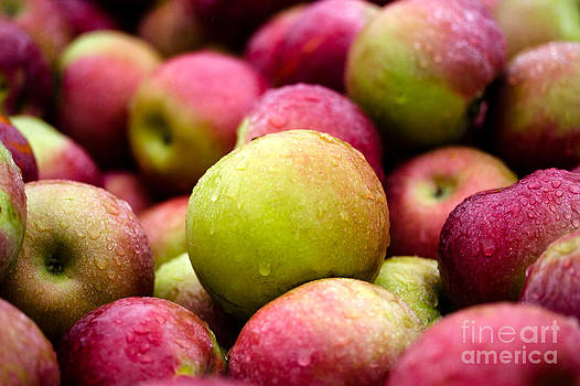 Apples in the Rain by Sharon Cuartero