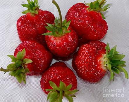 Gail Matthews - Freshly Picked Strawberries