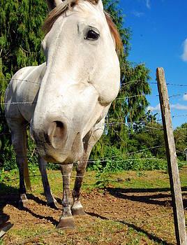 Friendly Horsey by Mamie Gunning