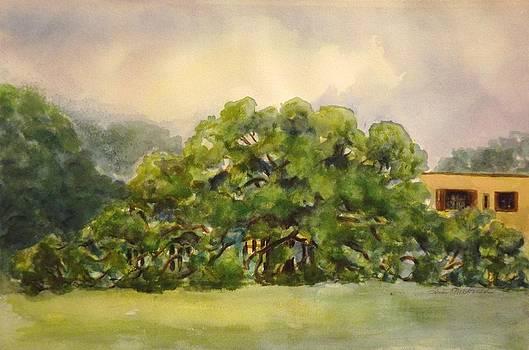 Friendship Oak Long Bch Ms by Tricia Mcdonald