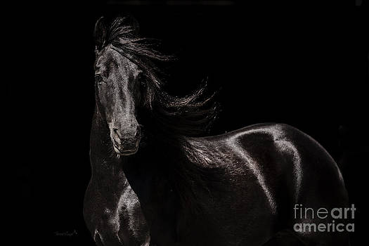 Friesian on Black by Terri Cage