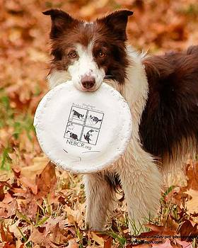 Frisbee anyone? by Sybil Conley