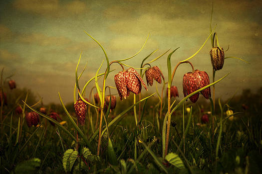Fritillaries2013 by Audran Gosling