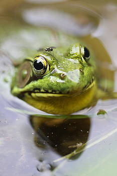 Frog and fly by Brian Magnier