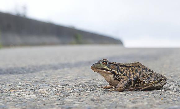 Paul W Sharpe Aka Wizard of Wonders - Frog Crossing the Road