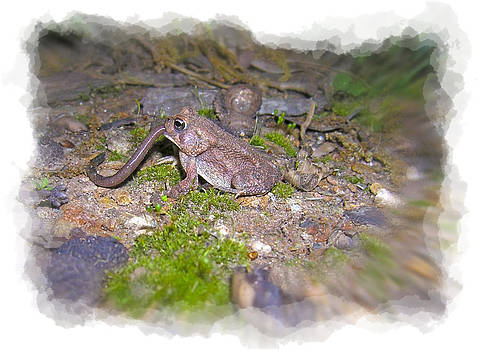 Frog Eating a Worm by Susan Leggett