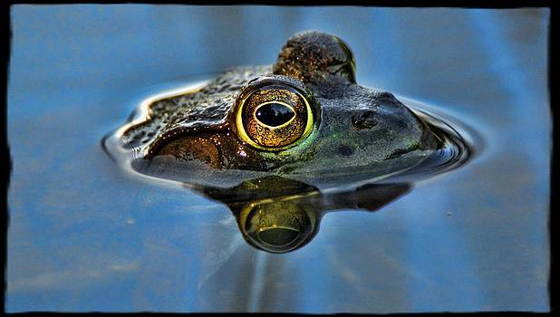 Frog Eyes by Jes Fritze