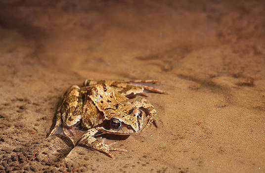 Dreamland Media - Frog in Crystal Clear Water