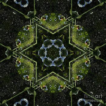 Frog Kaleidoscope by Cindi Ressler