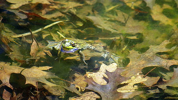 Frog by Lindy Whiton