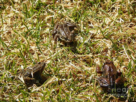 Frog Meeting by Jennifer Kimberly