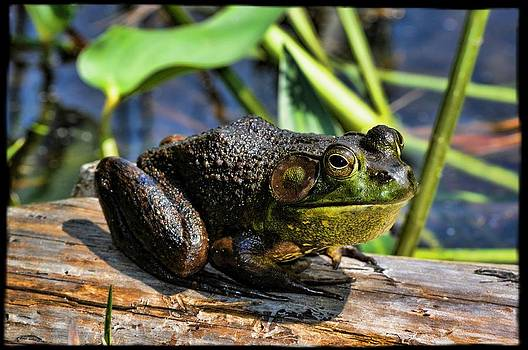 Frog On A Log by Jes Fritze