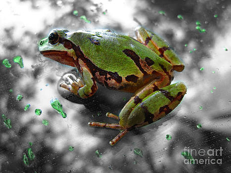 Frog on Glass by Karisa Kauspedas