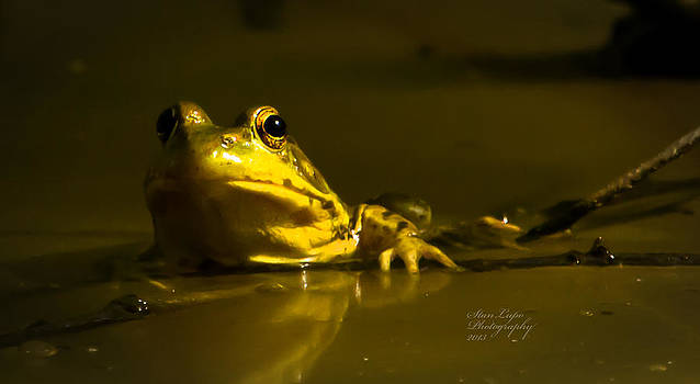 Frog POV by Stanley Lupo