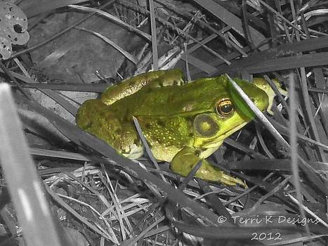 Frog by Terri K Designs