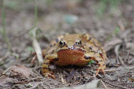 Frog  by Tom Salt