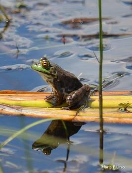 Maria Urso  - Froggy Reflections