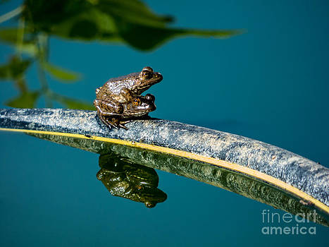 Frogs by Dragonfleyes Photography and Creations