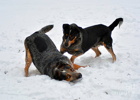Frolicking in the Snow by Anne Marie Corbett