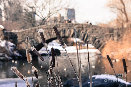 From Central Park 3 by Miro Vrlik
